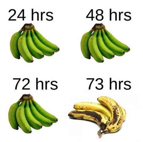 Bunch of Bananas Timeline - vitamin-ha.com fun with fruit.jpg