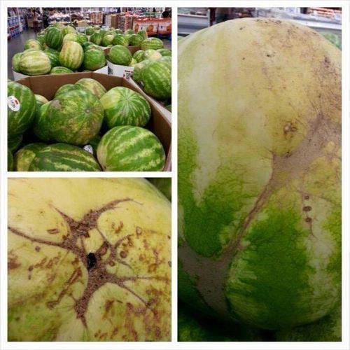 watermelon pick.jpg